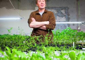 Зеленая плантация в подвале