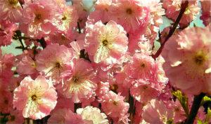 Нежнейшие цветы