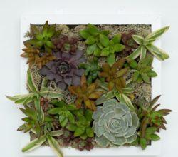 Невероятно красивое – в прямом смысле этого слова – панно из растений