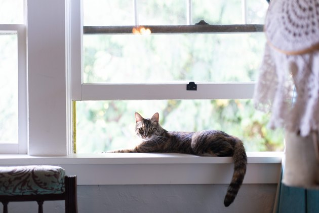 кошачий наполнитель