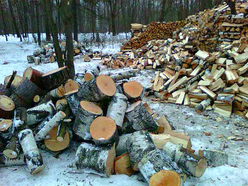 Как заготовить дрова для собственных нужд и не нарушить закон