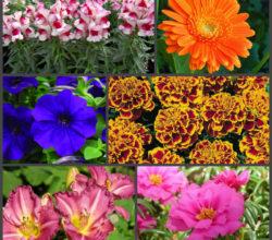 7 нетребовательных цветов, которые цветут весь сезон