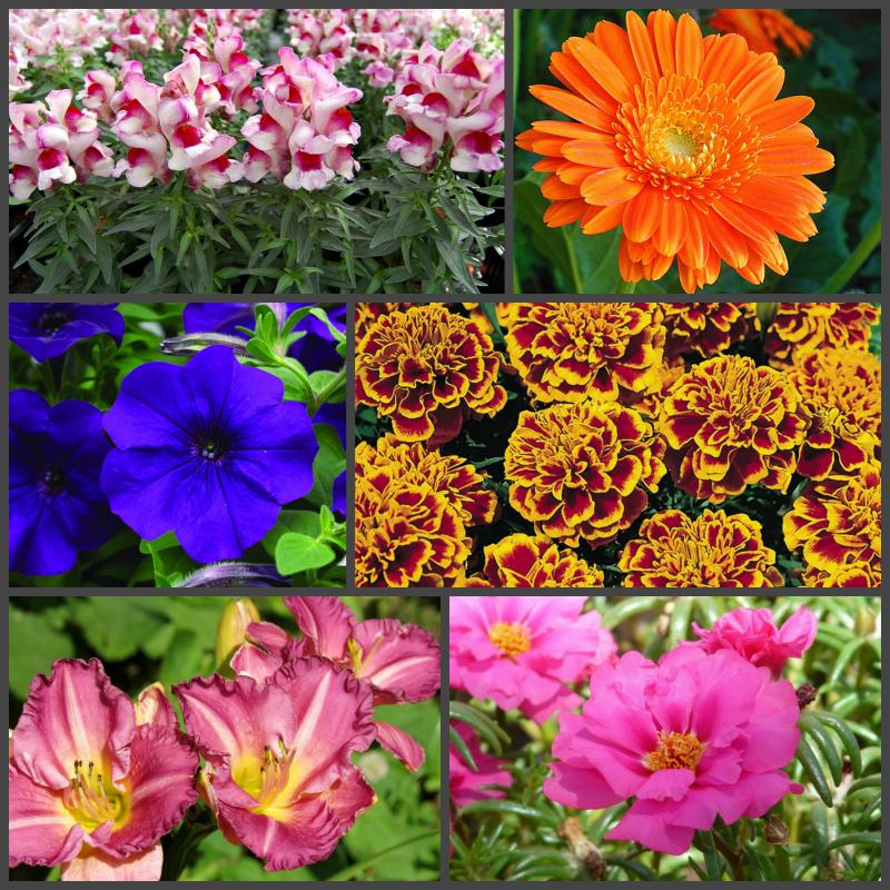 Цветы, цветущие весь сезон