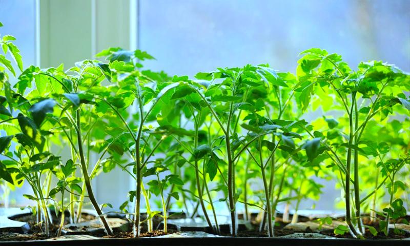 Подборка огородных хитростей: от выращивания рассады до уборки