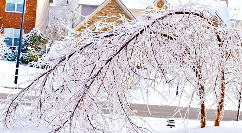 Как защитить растения от ледяного дождя