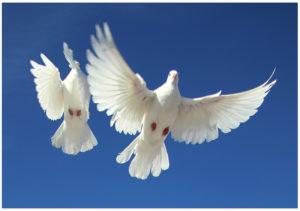 Парящие голуби