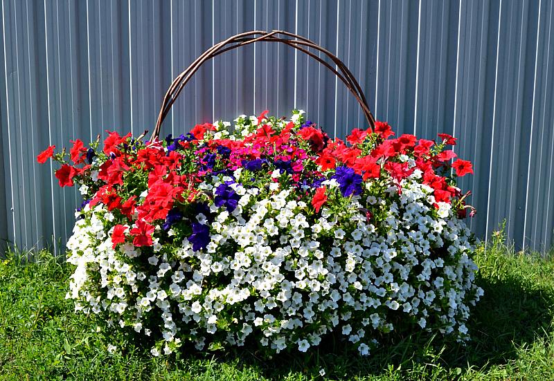 Садовые цветы - ампельная петуния