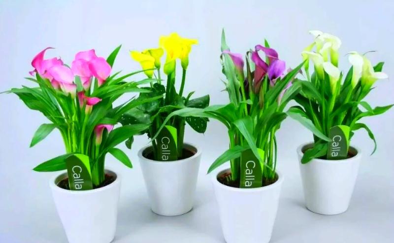 Удобрения для цветов - гарантия пышного цветения