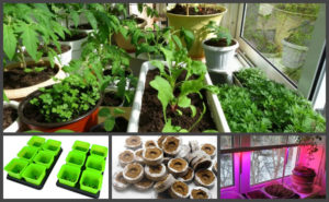 Выращивание рассады, чтобы ничего не забыть