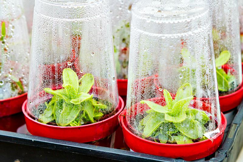 Выращивание рассады - индивидуальные горшки мини-парнички