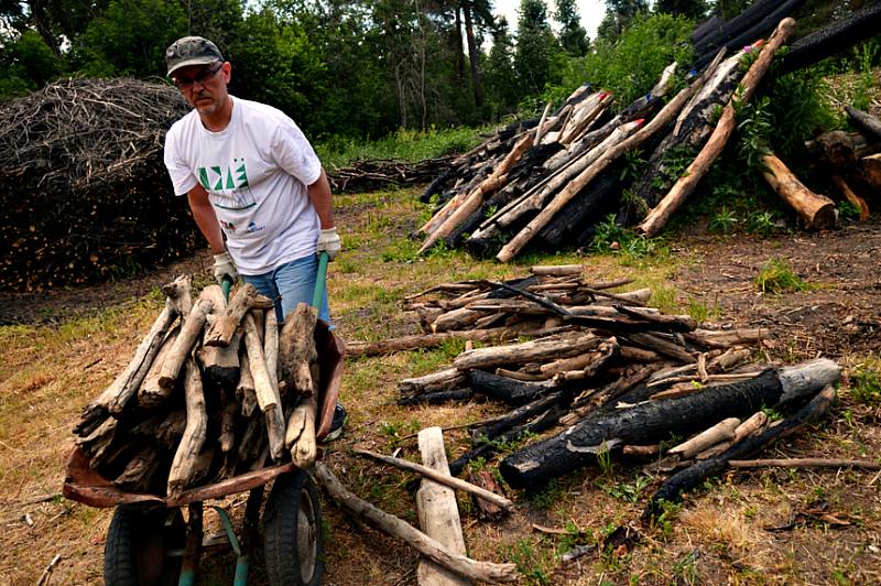 Заготовка дров - можно вывозить, но не трелевать