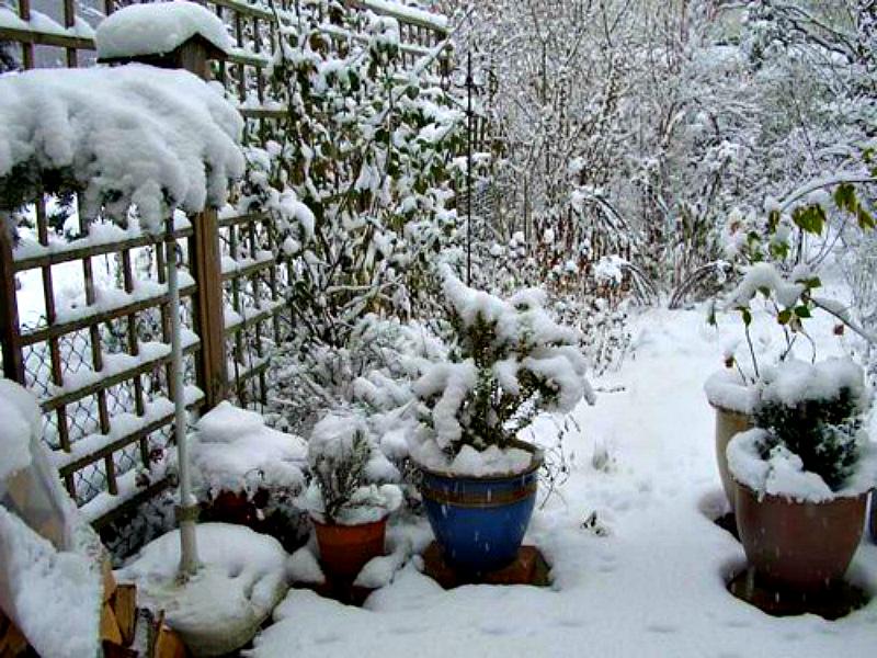Что нужно сделать садоводу в январе