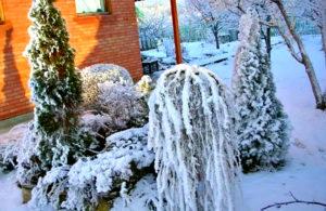 Дачный сад зимой