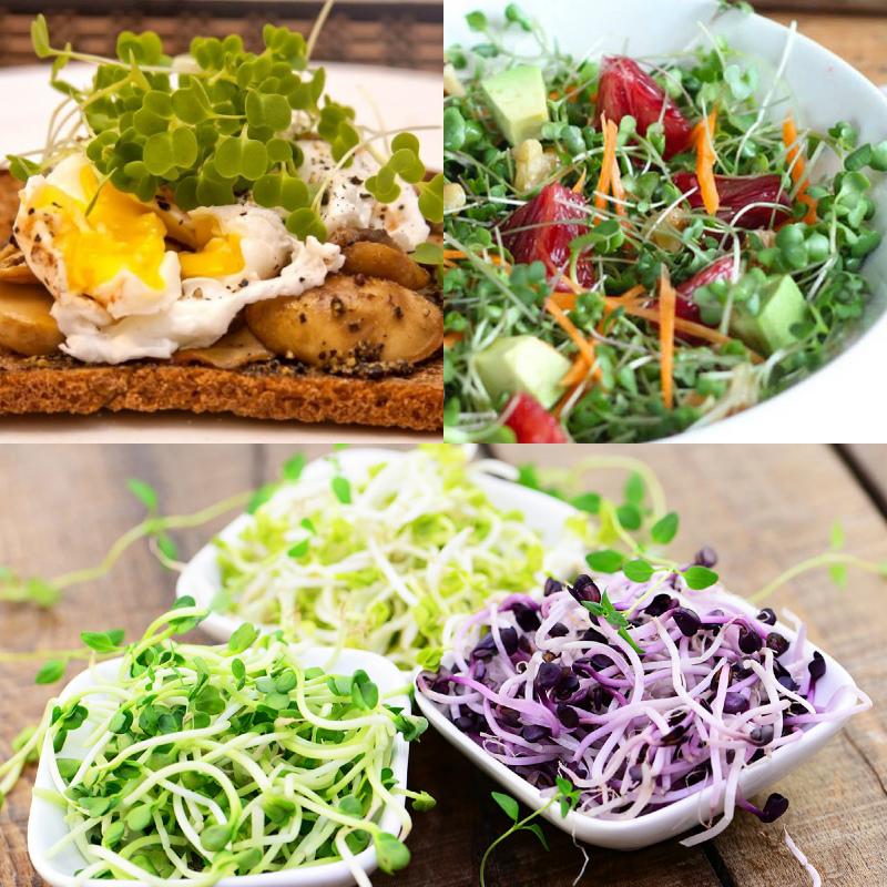Блюда с микрозеленью