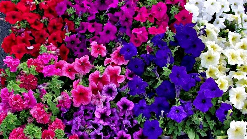 Буйство форм и расцветок
