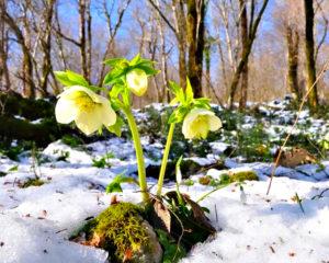 На пороге весна - проводим обследование сада