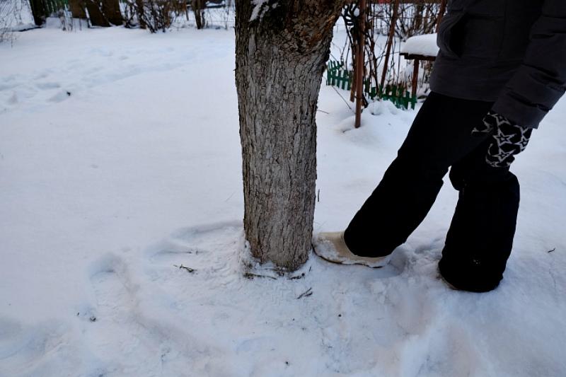 Притаптывайте снег вокруг стволов