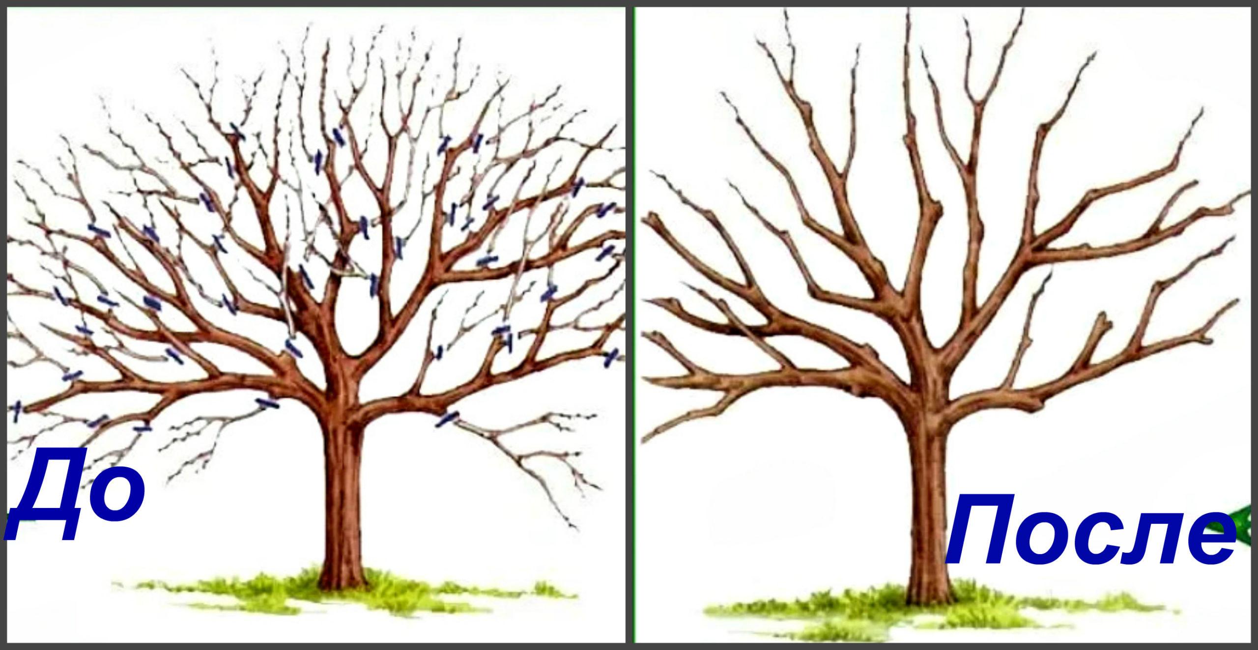 Схема обрезки деревьев