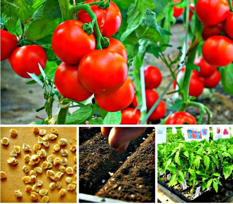Соблюдение технологии для хорошего урожая