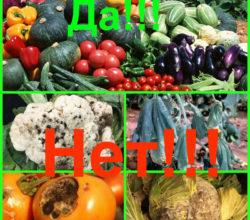 Здоровые овощи-да! Огородные болезни - нет!