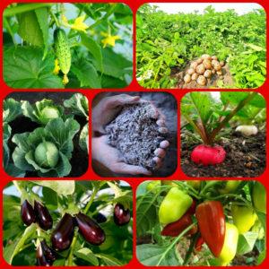 Зола ценное удобрение