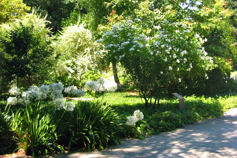 Монохромный белый сад