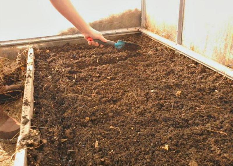 оздоровление почвы в теплице
