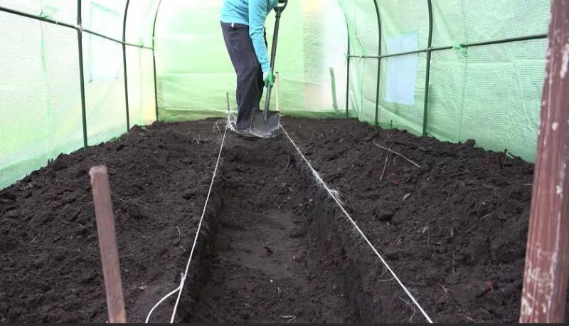Оздоровление почвы