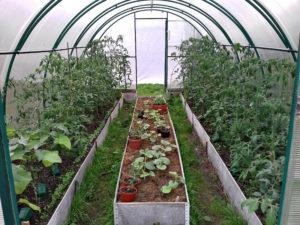Разные овощи в теплице