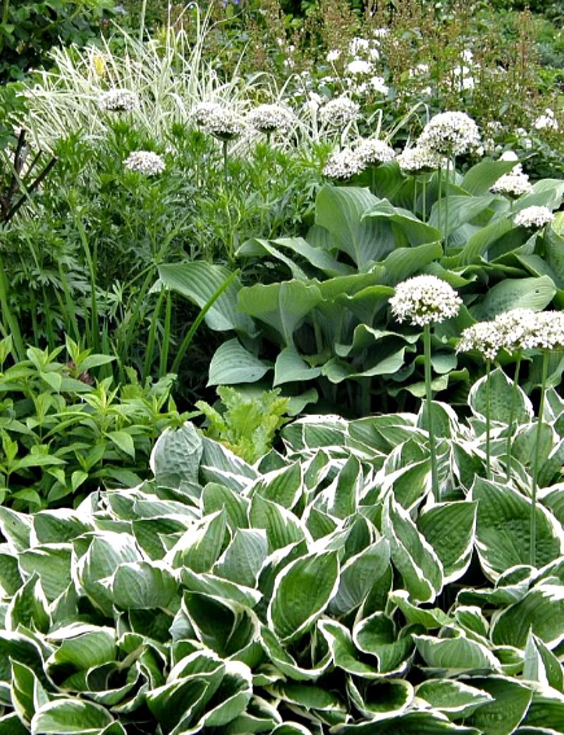 Сад оттенков белого