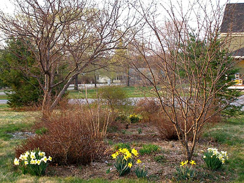 Уход за цветником весной