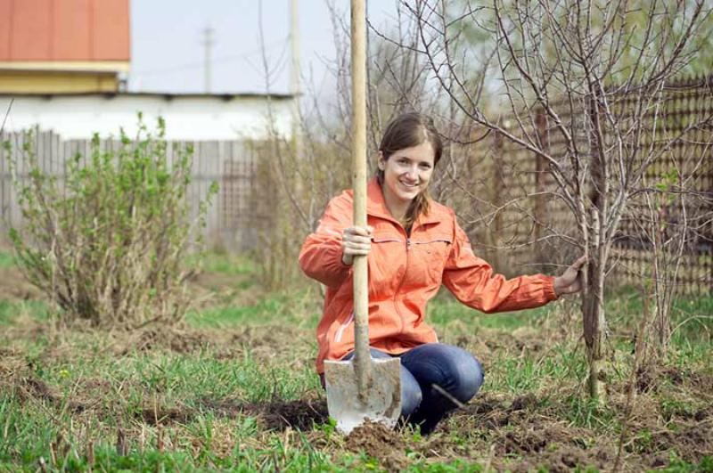Сад в апреле: дела которые нужно обязательно сделать