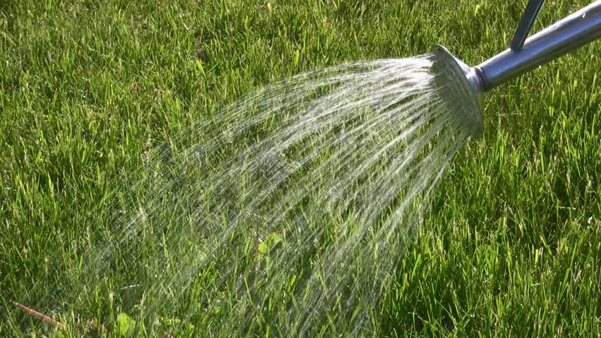 Чтобы реанимировать газон нужен полив