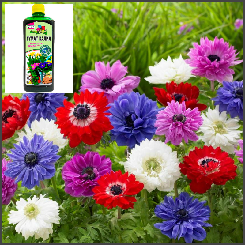 Гуминовые стимуляторы для цветов