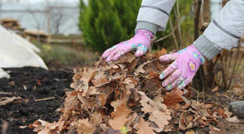 Листовой опад из леса - это будущая листовая земля