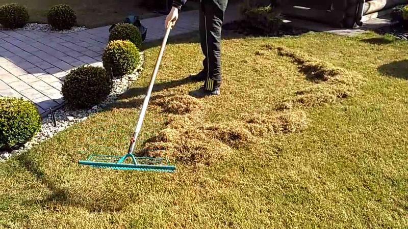 Вычесывание газона