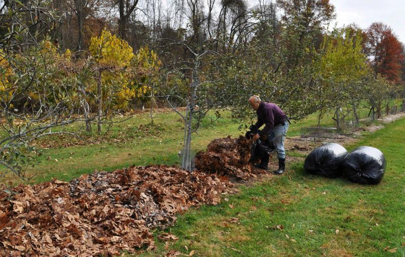 Заготавливайте листовой опад