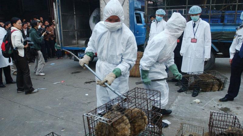 Животные могут быть источником инфекции