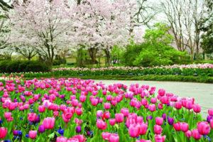 Сад в мае: список работ, чтобы ничего не забыть