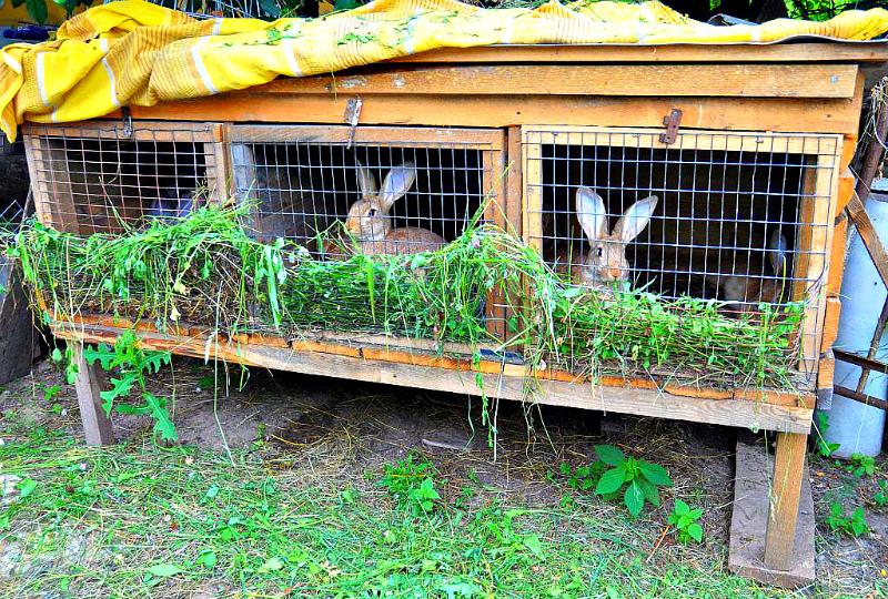 Клеточное разведение кроликов