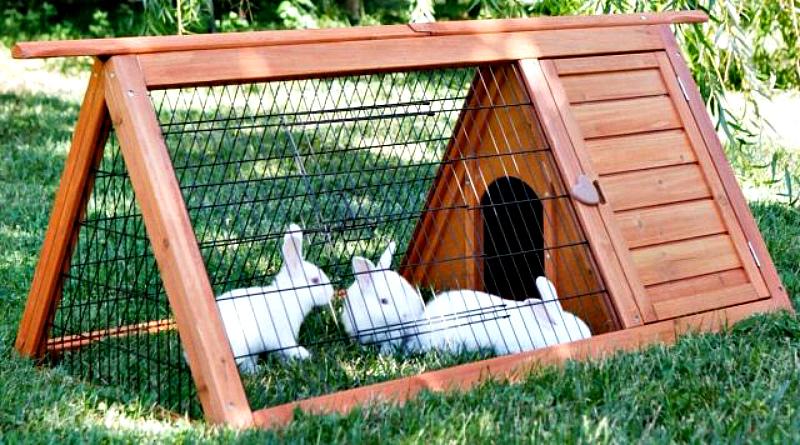 Кролики в передвижном домике
