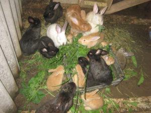 Кролики - летнее выращивание