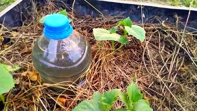 Лайфхаки - капельный полив из бутылки