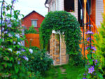 Лианы для вертикального озеленения