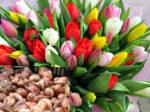 Луковицы тюльпанов и цветы
