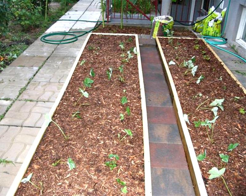 Ошибки при мульчировании - укрытие низкорослых растений