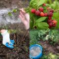 Подкормки малины ранней весной