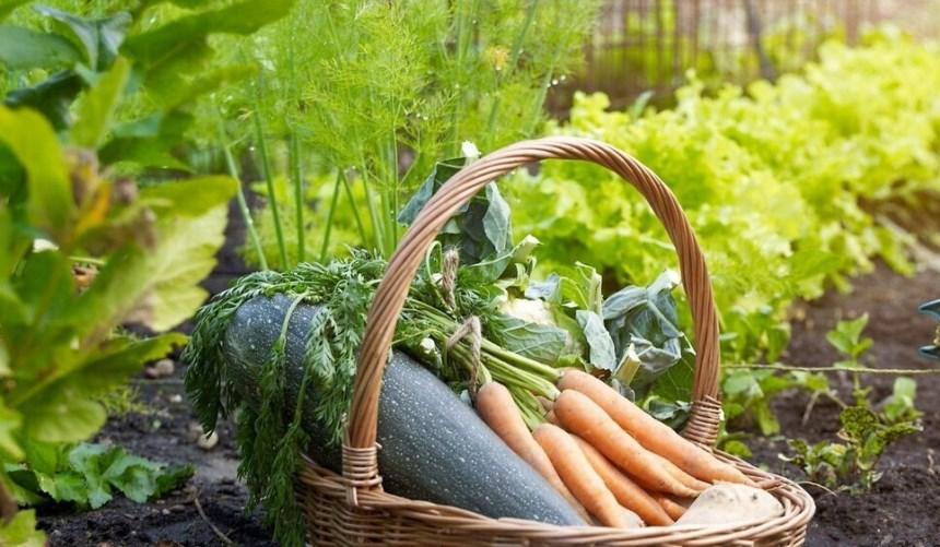 Садоводство - огородничество