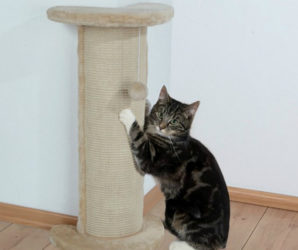 Когтеточка-для-кошки