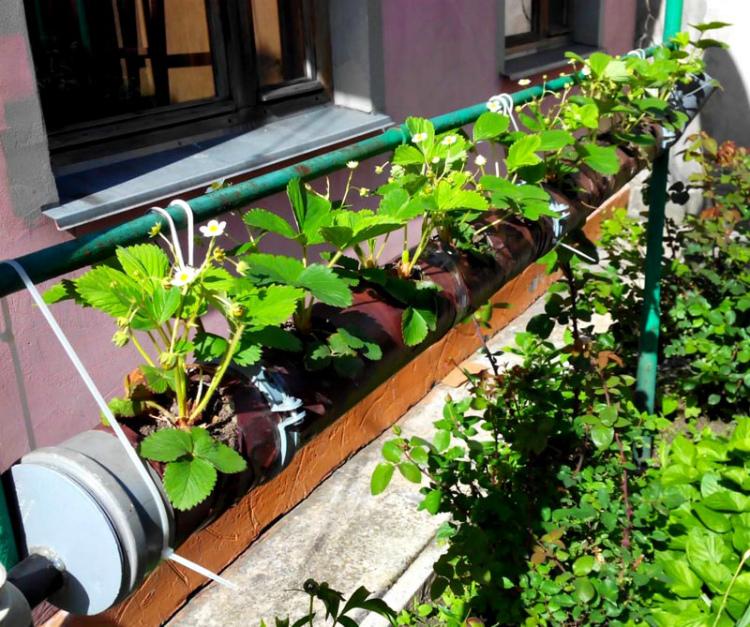 Можно выращивать даже под окном